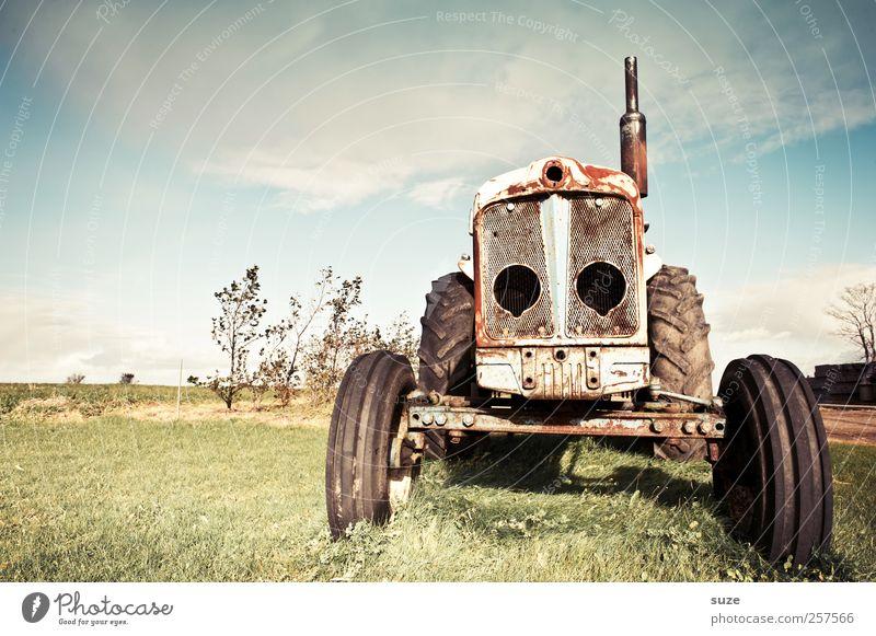 Dregga Landwirtschaft Forstwirtschaft Umwelt Natur Himmel Schönes Wetter Wiese Traktor Rost alt dreckig kaputt Vergänglichkeit Landleben Fahrzeug Gummireifen