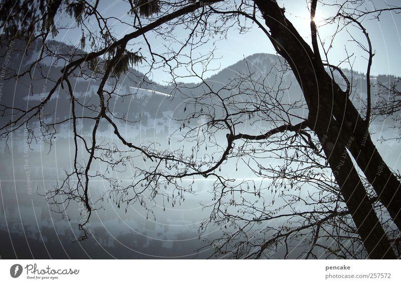 alptraum Umwelt Natur Landschaft Wasser Himmel Wolkenloser Himmel Sonne Sonnenlicht Winter Schönes Wetter Nebel Eis Frost Schnee Baum Küste See Gebirgssee Alpen
