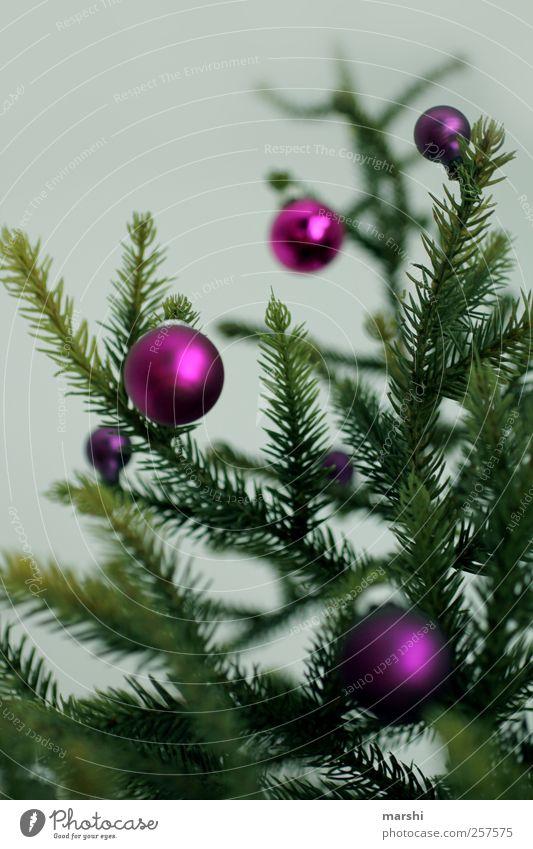 alle Jahre wieder Wohnung Pflanze Baum grün violett Weihnachten & Advent Christbaumkugel Weihnachtsdekoration klein Zweige u. Äste Weihnachtsbaum stachelig