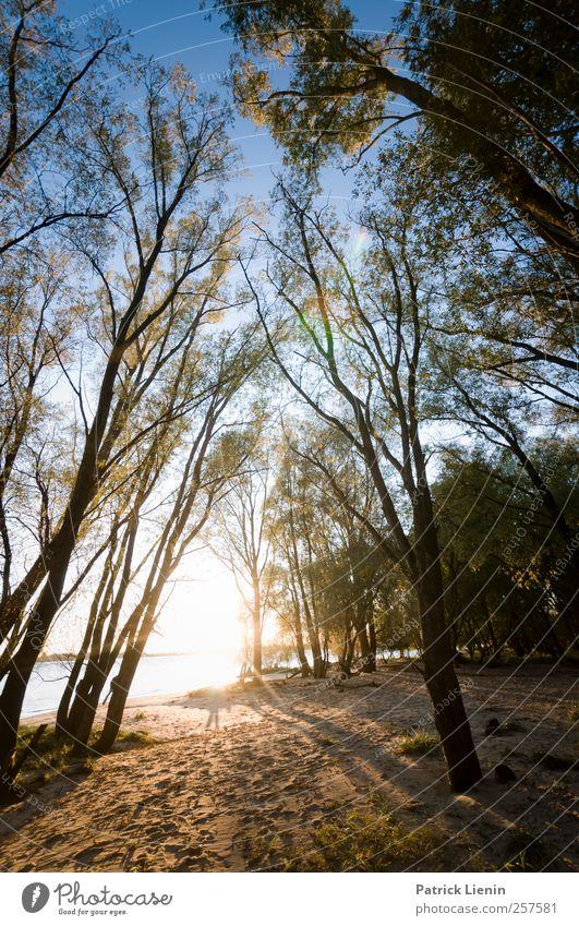 Evening hymns Himmel Natur schön Baum Pflanze Ferien & Urlaub & Reisen Sonne Sommer ruhig Erholung Umwelt Landschaft Herbst Küste Luft Wetter