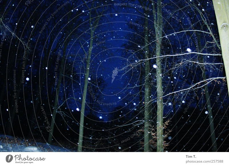 Winterwald Natur Nachthimmel Wetter Schnee Schneefall Baum Wald kalt Farbfoto Außenaufnahme Abend Kunstlicht Blitzlichtaufnahme