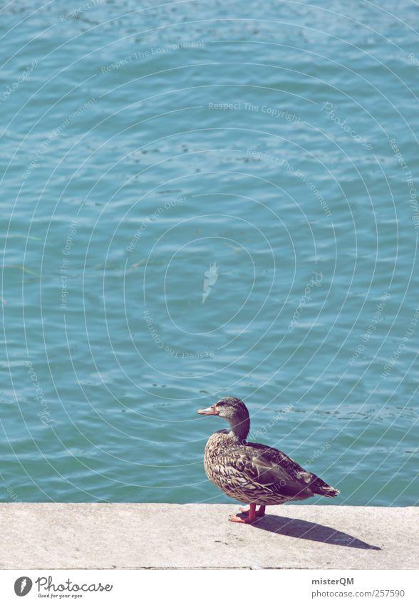 nak! Sommer Meer Tier See Vogel Wellen Wildtier ästhetisch Pause Hafen Sonnenbad Langeweile Ente Schnabel füttern Mittelmeer