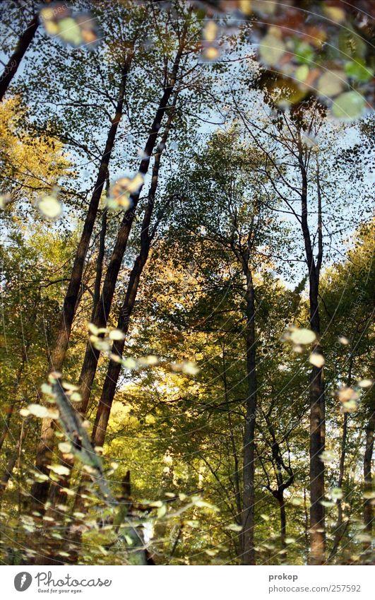 Herbst IV Himmel Natur Wasser schön Baum Pflanze Blatt ruhig Wald Erholung Umwelt Landschaft See Wetter Idylle