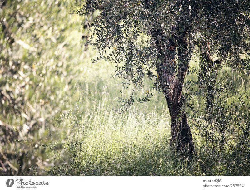 From the Gardens of Heaven. Natur grün Baum Pflanze ruhig Umwelt Landschaft Idylle Italien Paradies abgelegen mediterran Dämmerung Landleben friedlich