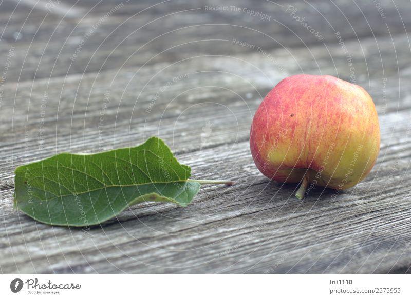 Apfel Lebensmittel Pflanze Herbst Blatt Garten mehrfarbig gelb grau grün rot schwarz weiß Bioprodukte Ernte Hülle Stengel süß Wut knackig Herbstbeginn Fallobst