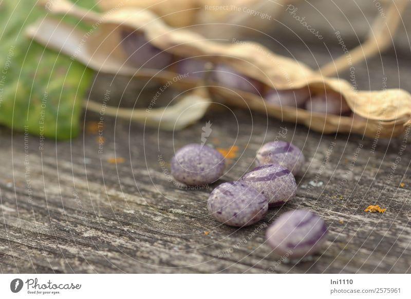 Stangenbohnen Gemüse Suppe Eintopf Natur Pflanze Schönes Wetter Garten braun gelb grau grün violett schwarz Bohnen Herbst mehrfarbig Vorrat Fleck Farbfoto