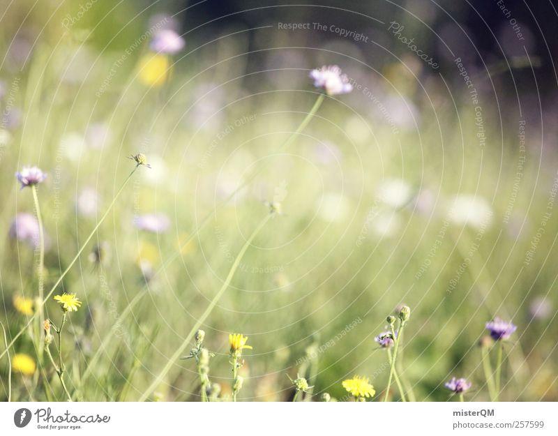 Duft+Sonne+Vogelgesang=Frühling. Natur grün Wiese Gras Blüte Kunst Zufriedenheit Wind ästhetisch Blühend Weide wehen Waldlichtung