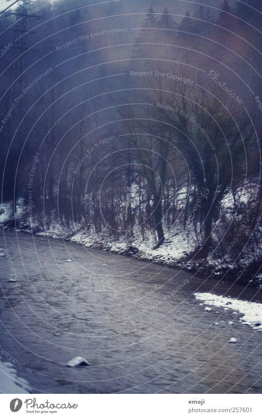 dreaming of wonderland Natur Wasser Baum Pflanze Winter Wald kalt Schnee Umwelt Landschaft träumen Klima Sträucher Fluss Ast Flussufer