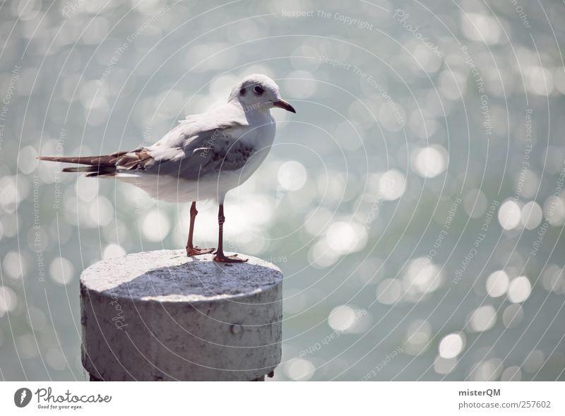 Möwenblick. Tier ästhetisch Zufriedenheit Möwenvögel Meer Mittelmeer Wellengang Meerwasser Hafen Hafenstadt Vogelperspektive Pfosten Aussicht Unschärfe