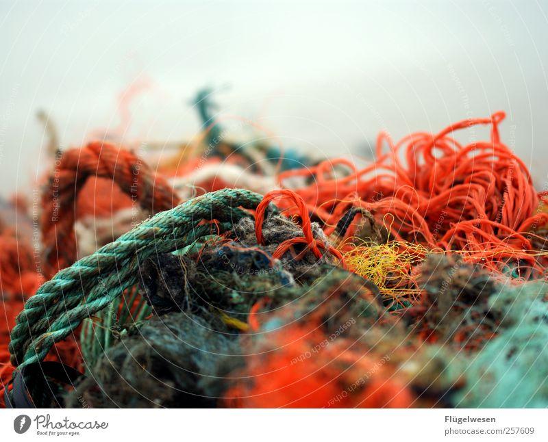 Netzwerk Fisch Meeresfrüchte Ernährung Freizeit & Hobby Angeln Ferien & Urlaub & Reisen Tourismus Ausflug Arbeit & Erwerbstätigkeit Beruf Winter