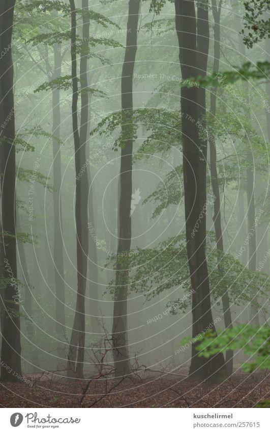 Sommernebel ruhig Meditation Natur Landschaft Pflanze Erde Wetter schlechtes Wetter Nebel Baum Wald ästhetisch dunkel gruselig kalt braun grün Vorsicht