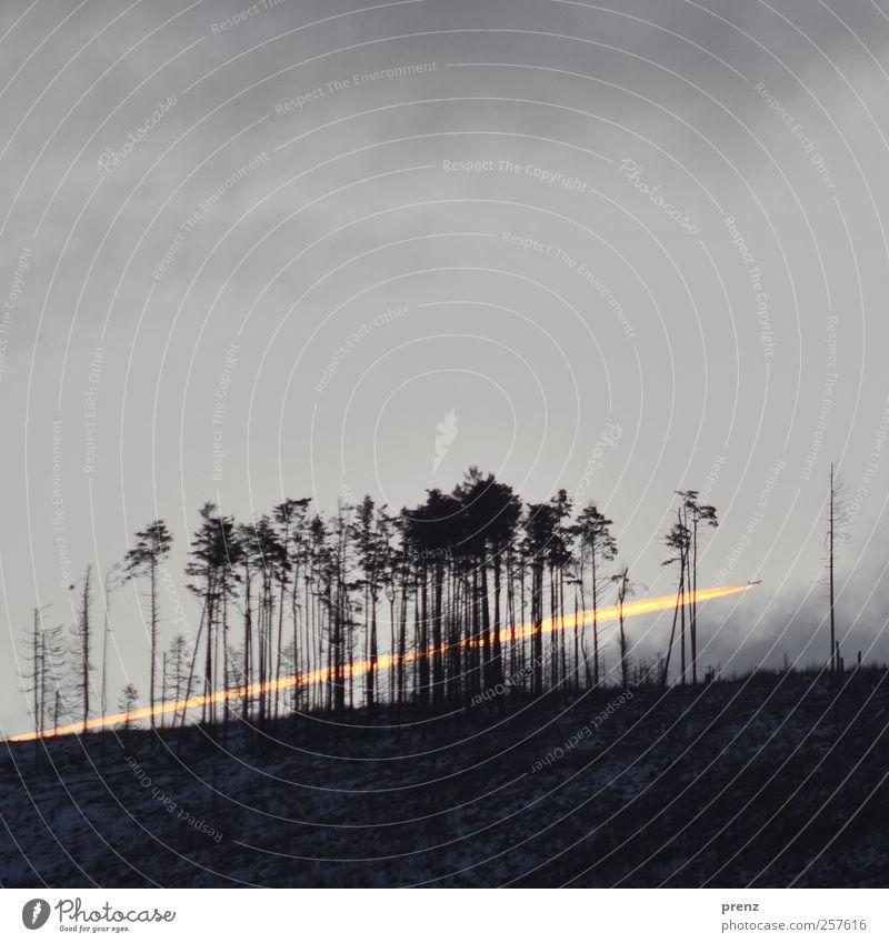 fire in the sky Natur Landschaft Pflanze Feuer Himmel Wolken Baum fliegen grau schwarz Flugzeug Kondensstreifen Winter Waldsterben Farbfoto Außenaufnahme