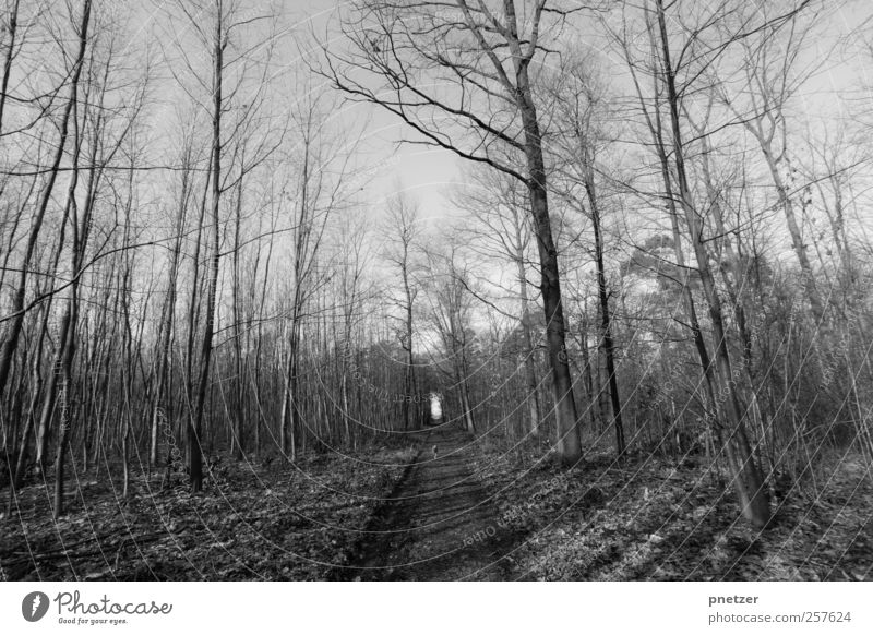 Forest Himmel Natur Baum Pflanze Winter Hund Tier Wald Umwelt Landschaft Freiheit Wege & Pfade Freizeit & Hobby wandern Abenteuer Klima