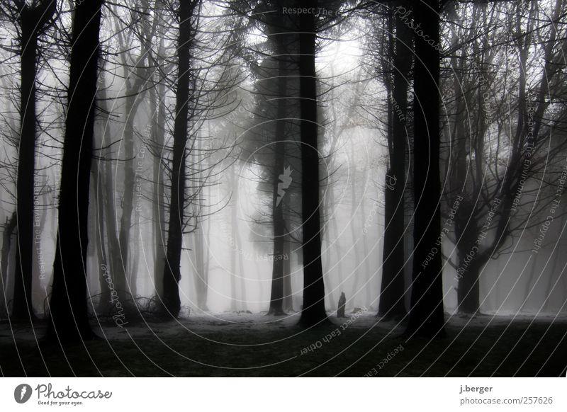 Nebelwald Winter Schnee Natur Landschaft Pflanze Herbst schlechtes Wetter Regen Eis Frost Baum Wald frieren außergewöhnlich dunkel gruselig kalt grau schwarz