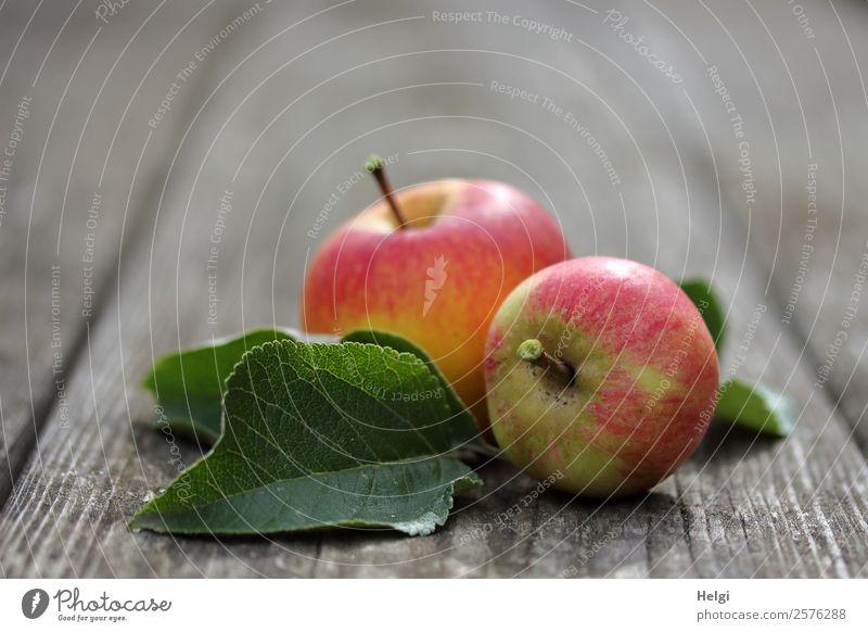 leckere Bio-Äpfel Frucht Apfel Ernährung Bioprodukte Vegetarische Ernährung Diät Blatt Garten Holz liegen ästhetisch Duft frisch Gesundheit einzigartig