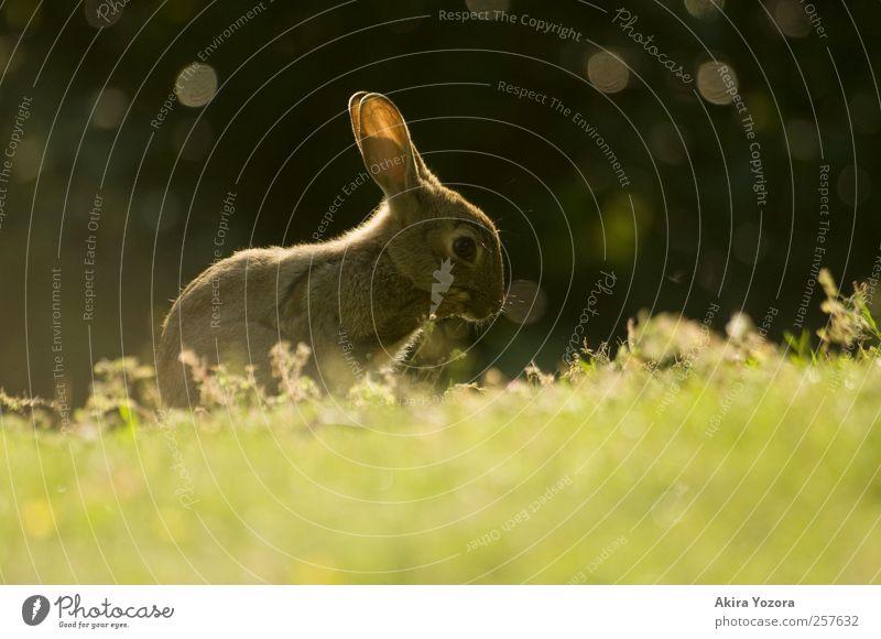 [100] Huch!? Natur weiß grün Sommer Tier schwarz Wiese Gras Frühling Park braun glänzend Wildtier sitzen natürlich frei