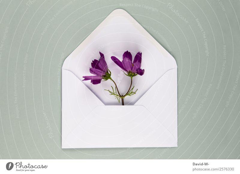 Blumengruß II Lifestyle elegant Glück harmonisch Mensch Paar Leben Kunst Künstler Umwelt Natur Frühling Blüte Duft schön Lebensfreude Liebe violett Liebesbrief