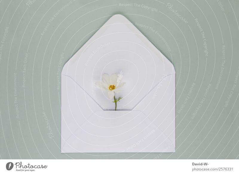 Blumengruß I Lifestyle schön Valentinstag Muttertag Hochzeit Geburtstag Trauerfeier Beerdigung Taufe Mensch Paar Leben Kunst Blüte Gefühle Liebe weiß