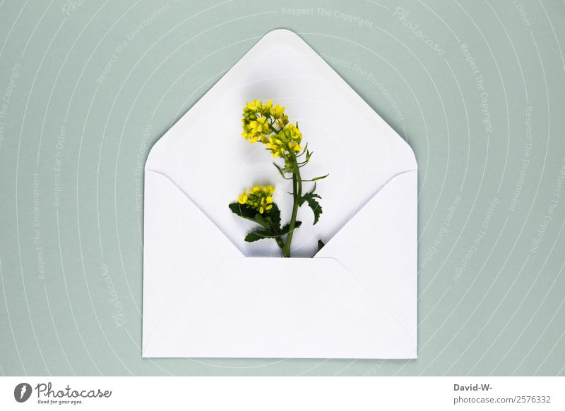 Blumengruß III Lifestyle Valentinstag Muttertag Hochzeit Geburtstag Mensch Paar Kunst Umwelt Natur Pflanze Wachstum Liebe Raps gelb Liebesbrief Liebeserklärung