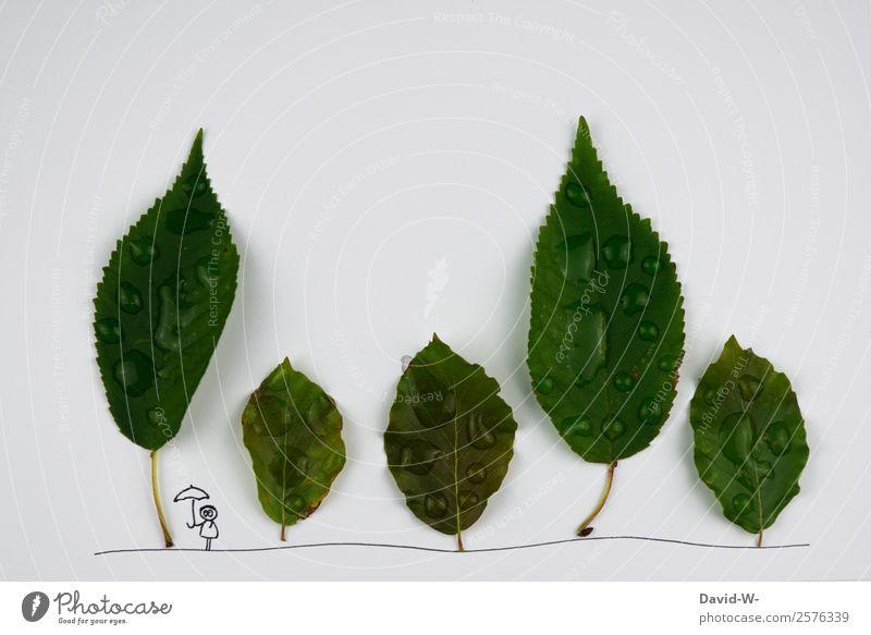 Regentag Frau Mensch Natur Jugendliche Mann Pflanze schön Wasser Baum Blatt Wald Erwachsene Leben Herbst Umwelt klein