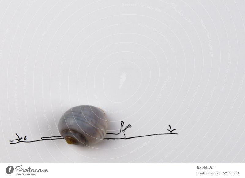 *Haustier* Kunst Umwelt Natur Frühling Sommer Schönes Wetter Pflanze Tier 1 krabbeln Schnecke Schneckenhaus langsam ruhig Gelassenheit Zeit Zeichnung