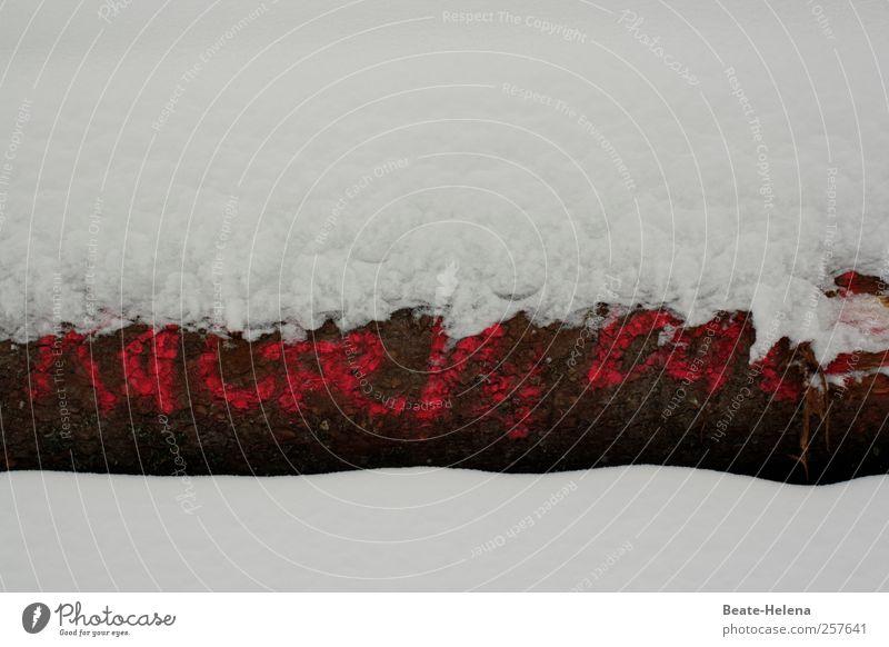 Unterkühlte Mitteilung Natur weiß Baum rot Winter Schnee Umwelt Gefühle Holz Schneefall braun Eis Coolness Frost Buchstaben Ziffern & Zahlen