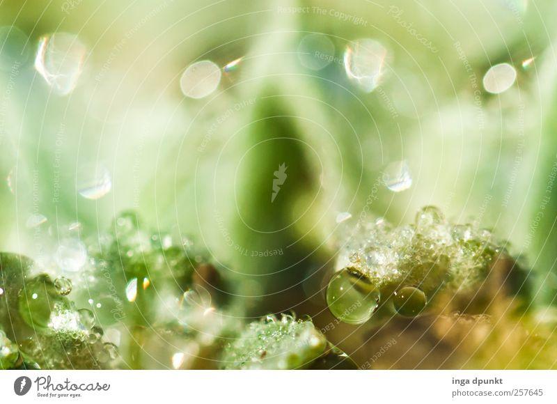 Reflexion Umwelt Natur Landschaft Pflanze Urelemente Wasser Wassertropfen Gras Moos Tau Tropfen kondensieren exotisch fantastisch kalt grün leuchten scheinend