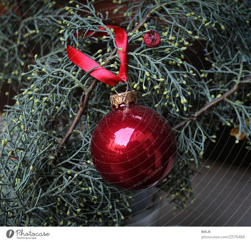 Nostalgische, festliche Weihnachtsdekoration mit zarten Tannenzweigen, roter Kugel und Geschenkband. Rote Weihnachtskugel hängt glänzend an Zweigen. Leuchtende Christbaumkugel aufgehängt an Ästen in altem, nostalgischem, rustikalem Stil zuhause, heimwärts