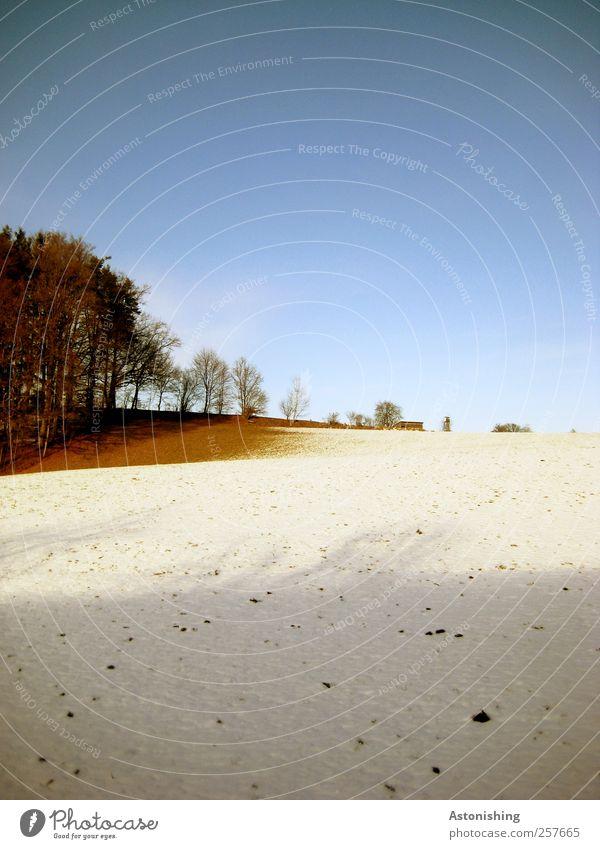 Schneegrenze Umwelt Natur Landschaft Pflanze Erde Himmel Wolkenloser Himmel Winter Wetter Schönes Wetter Eis Frost Baum Gras Sträucher Feld Hügel stehen hoch