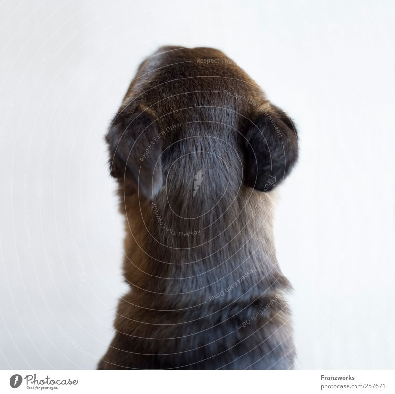 Identität II Natur Hund Tier außergewöhnlich weich Neugier Fell Erwartung fremd komplex Qualität verkehrt