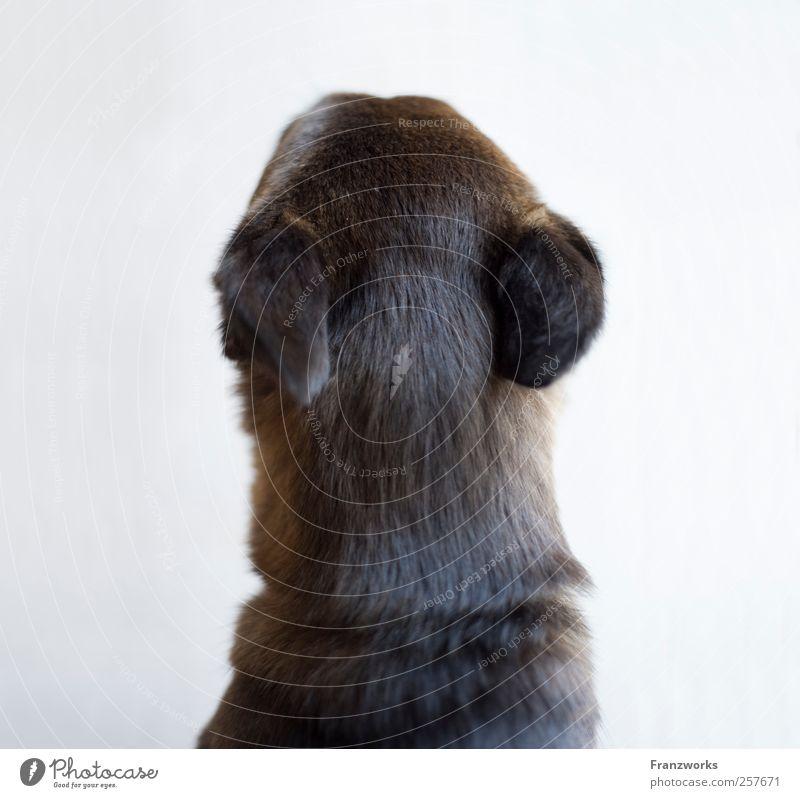 Identität II Tier Hund Fell 1 Erwartung Neugier Natur komplex Irritation fremd außergewöhnlich verkehrt Strukturen & Formen Qualität weich