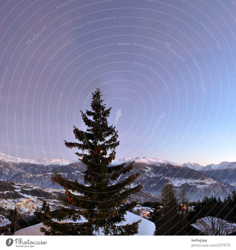 alpentraum Himmel Natur Baum Ferien & Urlaub & Reisen Winter Ferne Schnee Umwelt Landschaft Berge u. Gebirge Freiheit Horizont Freizeit & Hobby Nebel wandern