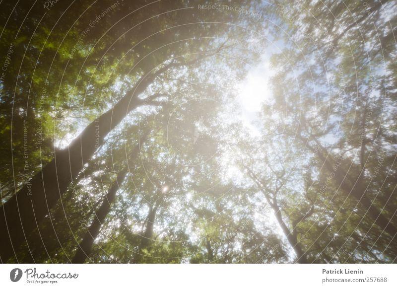 Freiheit Himmel Natur Pflanze Ferien & Urlaub & Reisen Sonne Sommer Wald Erholung Umwelt Landschaft oben Luft Stimmung Wetter Zufriedenheit Klima