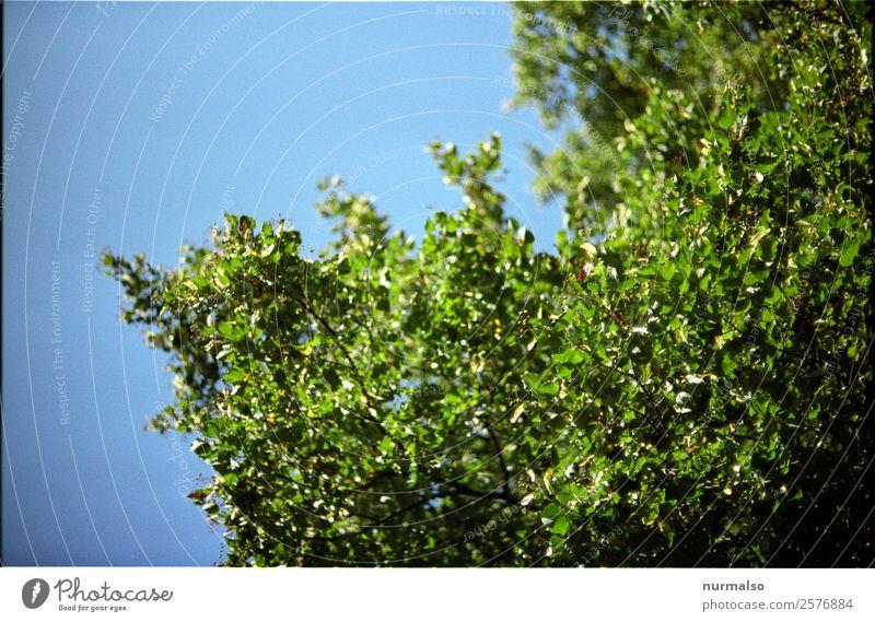 warten auf Grün Natur Pflanze Tier Sommer Klima Klimawandel Schönes Wetter Baum Blatt Garten Park Wald Erholung glänzend genießen leuchten Liebe Blick Wachstum