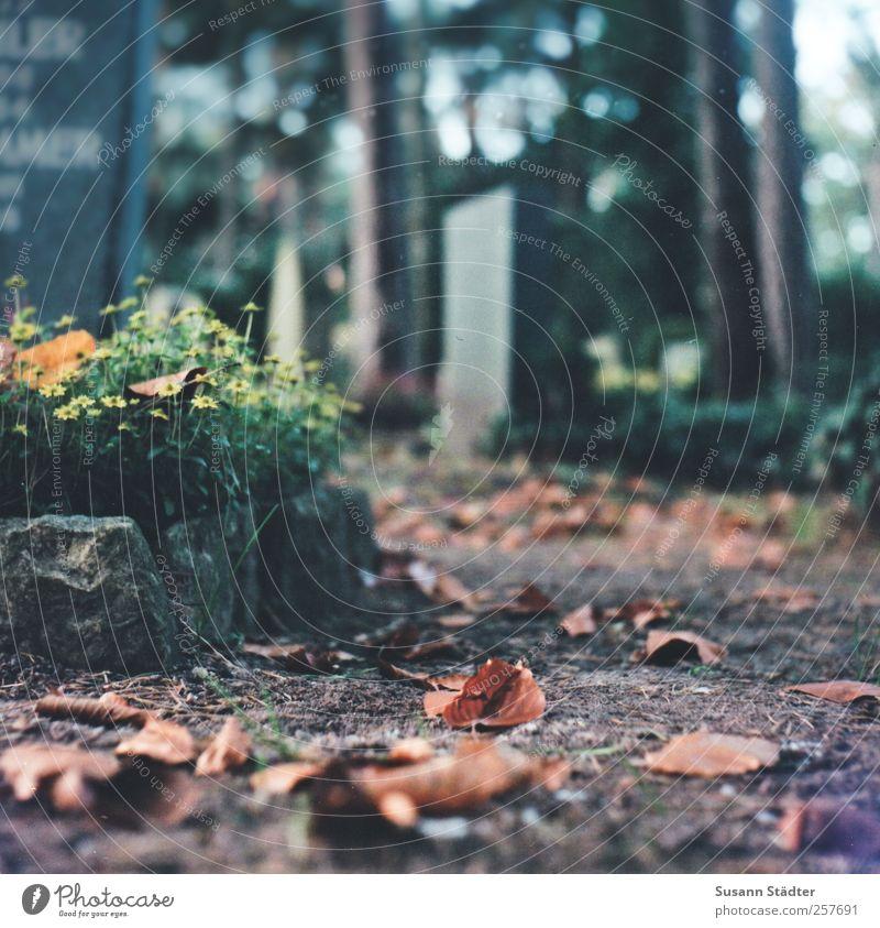 Blümchen für Harry Pflanze Baum Blatt Traurigkeit Wege & Pfade Tod Erde Idylle warten Urelemente Sehnsucht Herbstlaub Friedhof weinen Grab Geistlicher