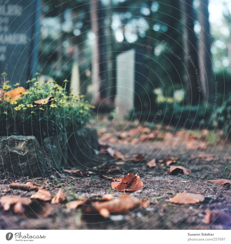 Blümchen für Harry Pflanze Urelemente Erde Blatt Traurigkeit warten weinen Tod Friedhof Grabstein Wege & Pfade Baum Idylle ruhen Ruhepunkt unvergesslich