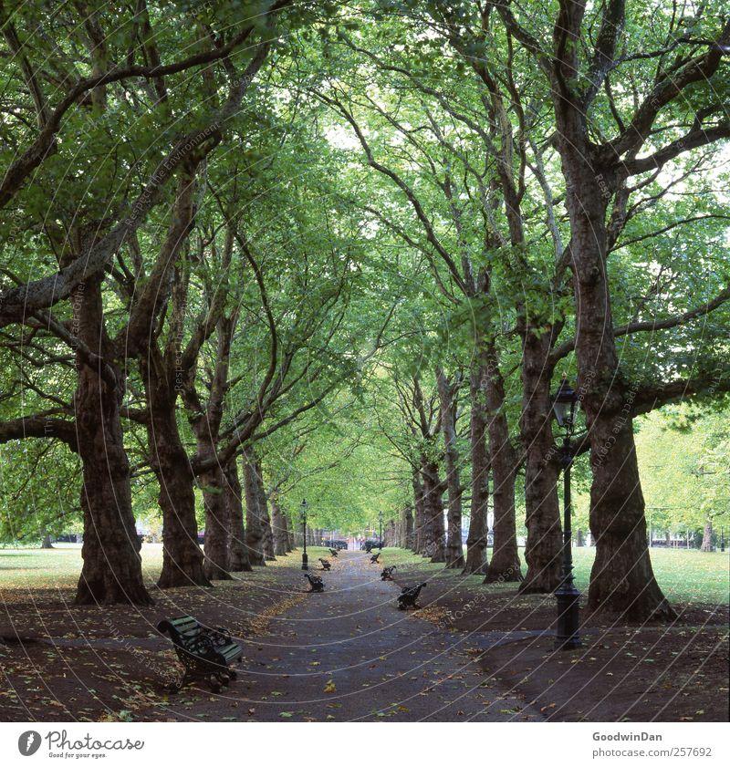 Geduld. Natur alt Stadt Baum Umwelt kalt Stimmung Park groß ästhetisch authentisch viele einfach Stadtzentrum Hauptstadt