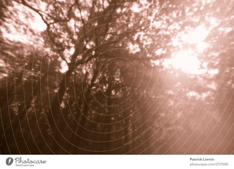 Traumwelt Umwelt Natur Landschaft Urelemente Luft Sonne Sonnenlicht Baum Wald hell natürlich wild Wut Stimmung bizarr Farbe Unschärfe träumen Farbfoto