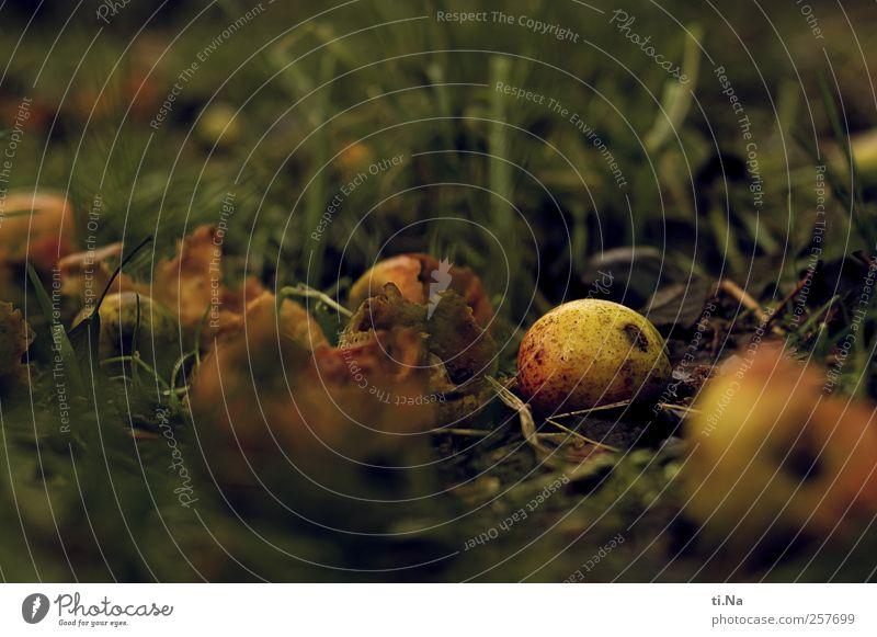 Fruchtbomben Natur alt grün rot Pflanze Winter gelb Umwelt Herbst Garten liegen Apfel Duft Bioprodukte saftig füttern