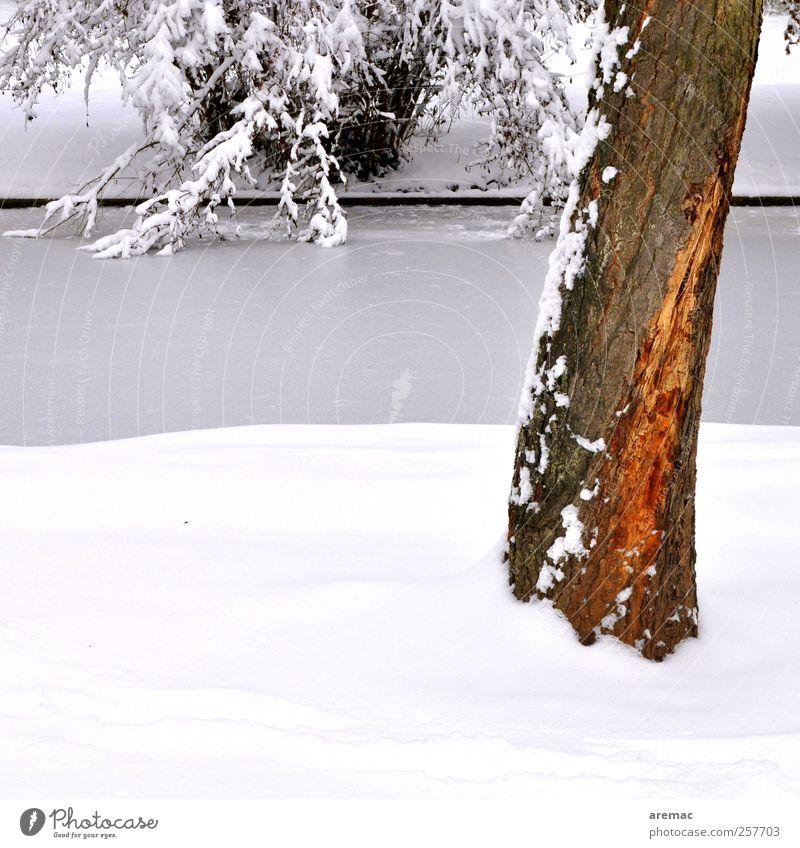 grauer Stamm Natur Pflanze Baum Landschaft ruhig Winter Schnee Eis Frost Fluss Flussufer Bach