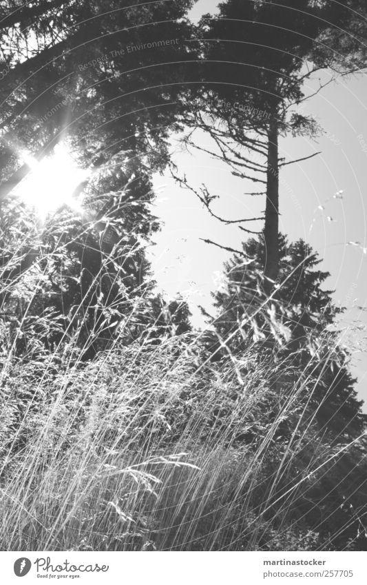 pure nature Jagd Ausflug Freiheit Berge u. Gebirge wandern Umwelt Natur Landschaft Wolkenloser Himmel Sonne Sommer Herbst Schönes Wetter Wind Pflanze Gras