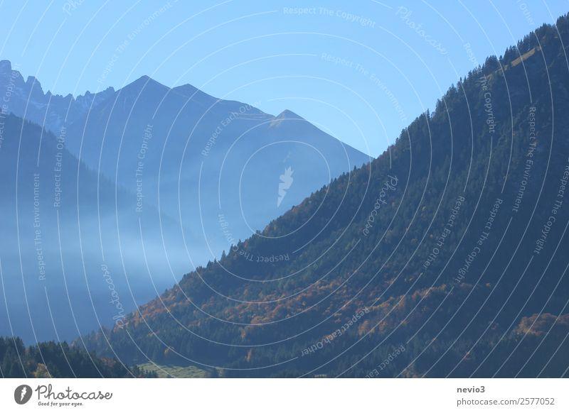 Bad Oberdorf im Allgäu Landschaft Wald Hügel Alpen blau Nadelwald Allgäuer Alpen Alpenvorland Berge u. Gebirge Bergkette Bergsteigen Kurort Natur Bergkamm