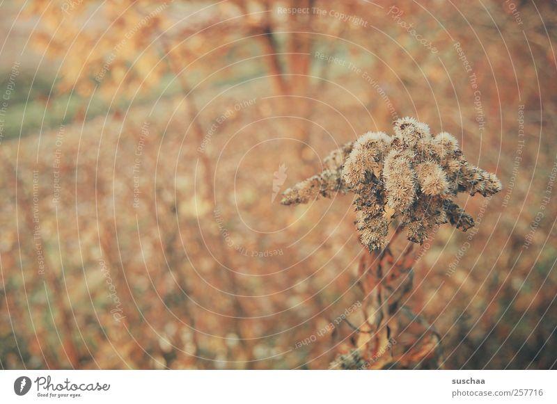 erinnerung Natur Baum Pflanze Sommer Blatt ruhig Herbst Umwelt Landschaft Wege & Pfade Wärme braun Feld Klima Sträucher