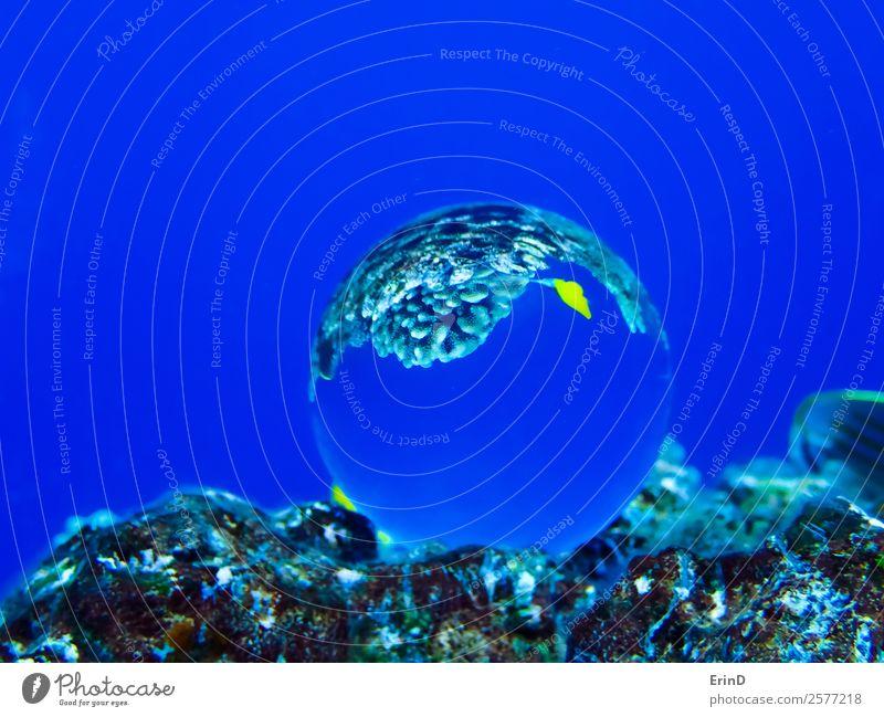 Glaskugel am Riff mit gelben tropischen Fischen Freude schön Erholung Ferien & Urlaub & Reisen Abenteuer Meer Sport Umwelt Natur Urwald Schmetterling Kugel