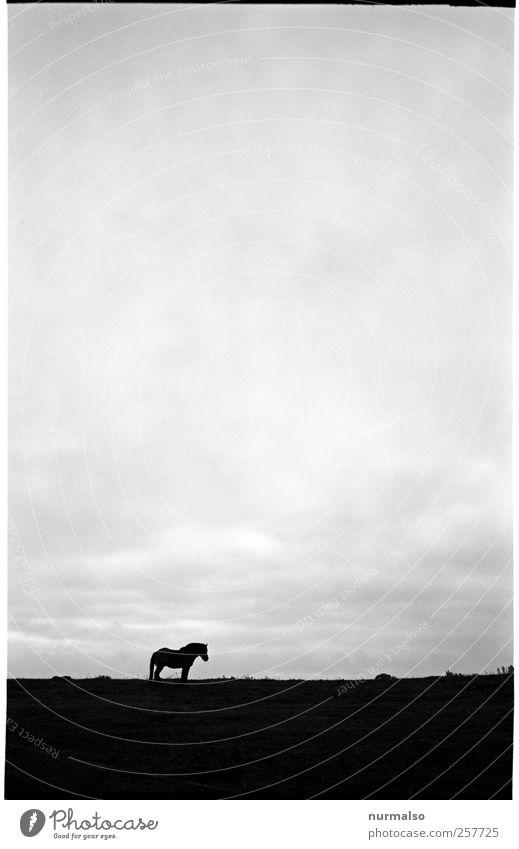 Pferd Himmel Natur ruhig Einsamkeit Tier Erholung Herbst Wiese dunkel Landschaft Horizont Zufriedenheit Freizeit & Hobby natürlich Pferd Zeichen