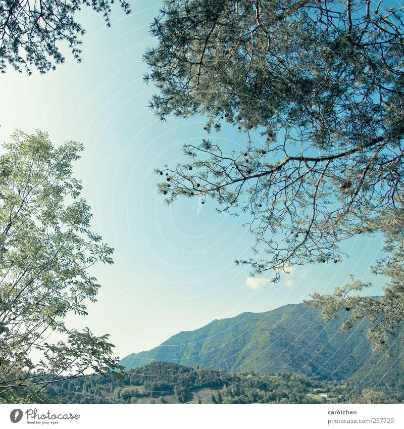 Horizont Himmel Natur blau grün Baum Wald Umwelt Landschaft Hügel Italien Zweig Geäst himmelblau Pinie