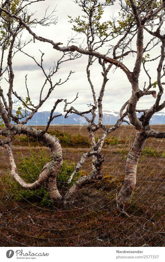 Grenzüberschreitung | Baumgrenze wandern Natur Landschaft Erde schlechtes Wetter Regen Pflanze Gras Berge u. Gebirge Wachstum außergewöhnlich ruhig demütig
