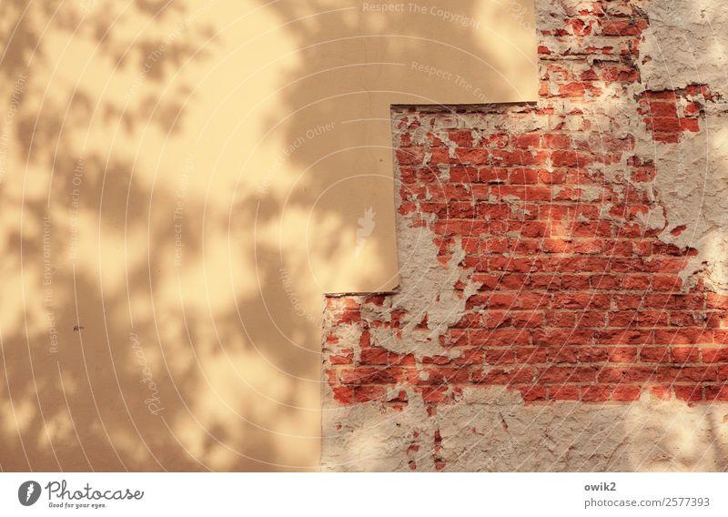 Ohne Geländer Mauer Wand Fassade Stein gelb rot Baumschatten Backstein Backsteinwand Treppe Farbfoto Außenaufnahme Nahaufnahme abstrakt Muster