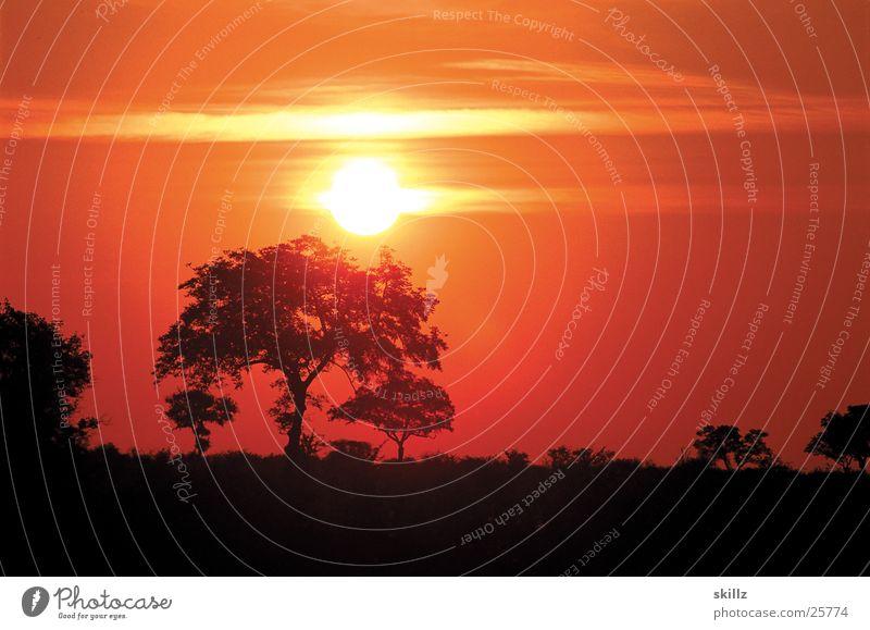 Africa Sunset Baum Sonne Sonnenuntergang