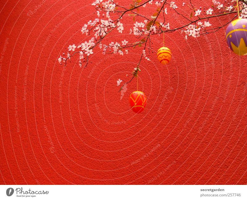 rumeiern. Baum rot Pflanze Blume Ernährung Wand Mauer Frühling Feste & Feiern Fassade Dekoration & Verzierung Sträucher Romantik Kitsch Ostern Blühend